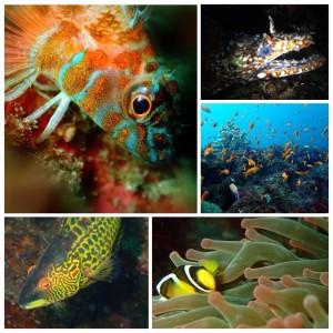 伊豆 ダイビング 城ヶ崎インディーズ 魚の色々
